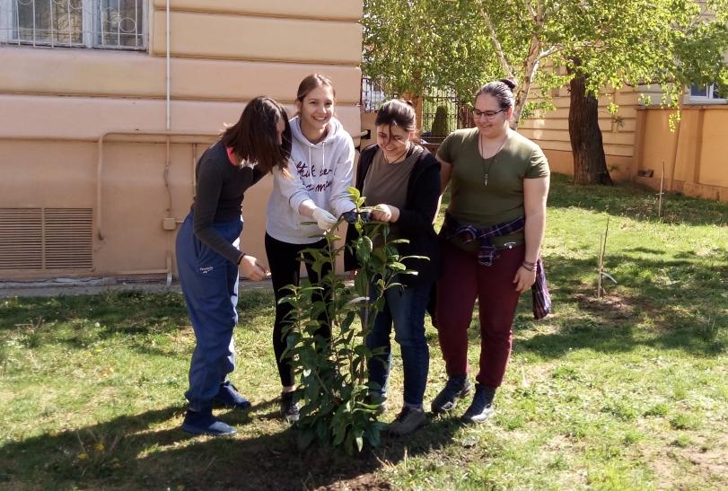 Actualitatea Brediceanu verde Lugoj 011